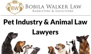 Animal Law Lawyers